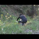 【動画】野草で作る自家製酵素ドリンク