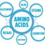 アミノ酸の技法